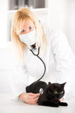 Veterinarian examining a domestic cat Stock Photos
