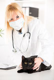 Veterinarian examining a domestic cat Royalty Free Stock Image