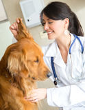 Veterinarian examining a dog Stock Image