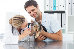 Veterinarian examining ear of puppy. Female veterinarian examining ear of puppy with men in clinic Stock Images