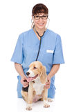 Veterinarian examining a puppy dog. isolated on white background Stock Image