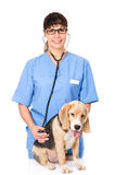 Veterinarian examining a puppy dog. isolated on white background Stock Photo