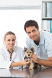Veterinarian examining puppy with man Royalty Free Stock Photography