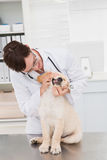 Veterinarian examining teeth of a cute dog Royalty Free Stock Photos