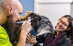 Veterinarian exploring the ear of a greyhound together with its owner stock image