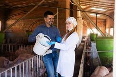 Veterinarian and farmer in pigsty. Portrait of female veterinarian and male farmer talking about all-mash forage for animals in pigsty Stock Image