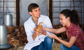 Veterinarian and female farmer in hen house. Smiling male veterinarian talking to female farmer in hen house . Focus on man Stock Photography
