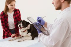 Vet holding clipboard getting dog checked. Veterinarian filling in patients info on tablet with stylus. Handsome male vet doctor doing patient check up via Stock Image