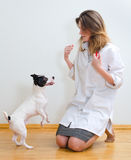 Veterinarian getting in contact with dog Royalty Free Stock Photo