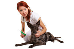 Veterinarian giving dog Royalty Free Stock Image