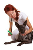 Veterinarian giving dog deworming Royalty Free Stock Photography