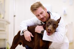 Veterinarian giving a hug to his patient. Friedship between dog and man Stock Photos