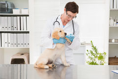 Veterinarian giving medicine to dog Royalty Free Stock Images
