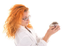 Veterinarian with hedgehog Stock Photography
