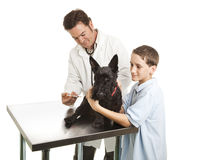 Veterinarian and Helper Stock Photo