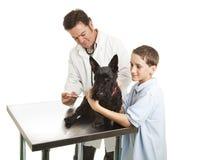 Veterinarian and Helper Stock Photo