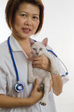 Veterinarian holding 1 Kitten Stock Photo