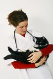 Veterinarian holding black cat. A view of a female veterinarian holding a large black cat in her arms stock images