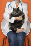Veterinarian holding cat. Stock Photo