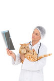 Veterinarian holding cat and looking at xray Stock Photography