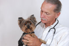 Veterinarian holding dog, Yorkshire Terrier Royalty Free Stock Photos