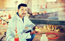Veterinarian holding duckling in hands. Mature male veterinarian holding duckling in hands on farm Royalty Free Stock Photos