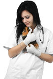 A veterinarian holding a guinea pig Stock Photography