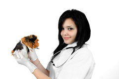 A veterinarian holding a guinea pig Stock Photos