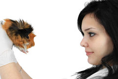 A veterinarian holding a guinea pig Royalty Free Stock Photo