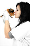 A veterinarian holding a guinea pig Royalty Free Stock Photos