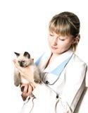 Veterinarian holding kitten. Veterinarian holding fluffy little kitten with blue eyes stock photos