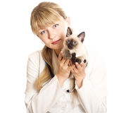 Veterinarian holding  kitten Stock Photography
