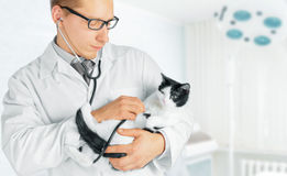 Veterinarian holds a feline Royalty Free Stock Images