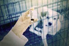Veterinarian holds rabies vaccine with sick dog