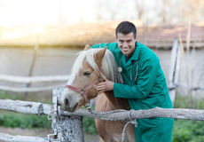 Veterinarian with horse Royalty Free Stock Photo