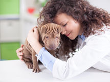 Veterinarian hugging and calms the dog Stock Images
