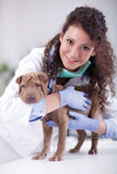 Veterinarian hugging  Shar Pei dog Royalty Free Stock Photography