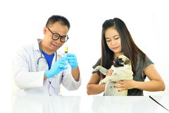 Veterinarian with sick dog. Veterinarian injecting drug to sick dog Royalty Free Stock Images
