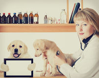 Veterinarian listens  puppy Royalty Free Stock Image