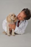 Veterinarian and Little Dog Royalty Free Stock Images