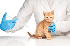 The veterinarian makes an injection to a cat with syringe Royalty Free Stock Images