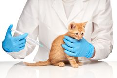 The veterinarian makes an injection to a cat with syringe Royalty Free Stock Image