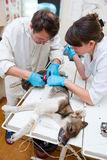 The veterinarian makes surgery Stock Photos
