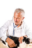 Cat checkup  Royalty Free Stock Image