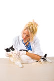 Veterinarian checkup of cat Royalty Free Stock Photo