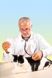 Veterinarian making therapy to cat Royalty Free Stock Images