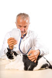 Veterinarian making therapy to cat Stock Images