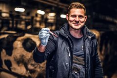 A veterinarian man holding a test-tube with red liquid on a cow farm indoors. A cheerful veterinarian holding a test-tube with red liquid on a cow farm indoors stock image