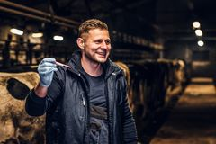 A veterinarian man holding a test-tube with red liquid on a cow farm indoors. A cheerful veterinarian holding a test-tube with red liquid on a cow farm indoors stock images