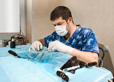 Veterinarian. Man operating cat in veterinary station Royalty Free Stock Photos